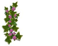 elementy projektu granicznego ivy kwiecisty Fotografia Stock