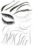 elementy włosy ilustracja wektor