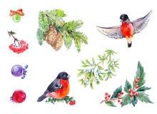Elemets de la decoración del invierno Año Nuevo de la acuarela fijado con el pájaro rojo Imagen de archivo libre de regalías