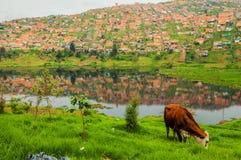 Elendsviertel-Süden von Bogota lizenzfreies stockfoto