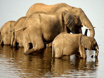 Southern african animals Royalty Free Stock Images