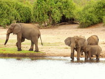 Southern african animals Stock Photography