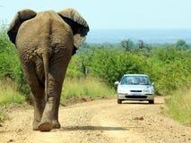 Südliche afrikanische Tiere Stockfotografie