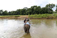 The elepant and the tourist in the river in the forest park in chitwan,Nepal Royalty Free Stock Photo
