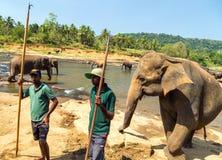 Elepants het Baden in Rivier Sri Lanka, Ceylon stock foto's