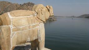 Elepha zonnige dag Stock Afbeeldingen