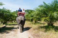 Elephamt riding by tourists in tropical green palms and trees Royalty Free Stock Image