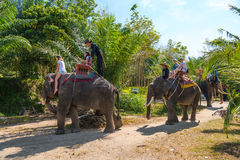 Elephamt riding by tourists in tropical green palms and trees Stock Images