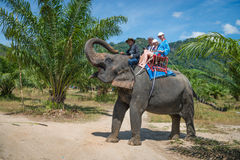 Elephamt riding by tourists in tropical green palms and trees Stock Image