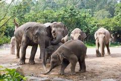 Elephan Royalty-vrije Stock Fotografie