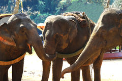 Elephan Stock Images