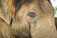 Elephan Стоковое Изображение