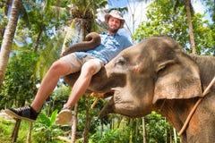 Elephan lifting a tourist. Stock Photo