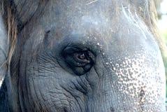 Elephant 03. Eye Royalty Free Stock Images