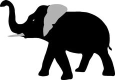 Elephant. With trunk going up Stock Photos