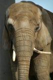 Elephant. Under shade royalty free stock image