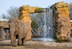 Elephant. An elephant walking in the sun by a waterfall Royalty Free Stock Photos