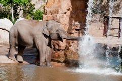Elephant. An elephant having a bath Stock Image