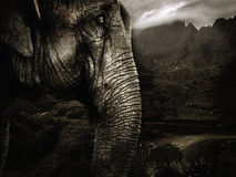 Elephant. Sepia tone image of an elephant Stock Photo