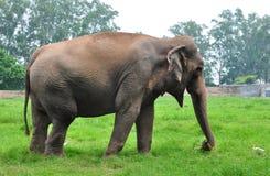Free Elephant Stock Photo - 15662420