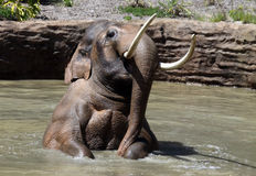 Free Elephant Stock Image - 19185061