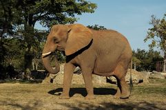 Free Elephant 2 Stock Photos - 3357093