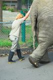 Elephant. Zoo keepers exercise elephant at the Zoo Stock Image