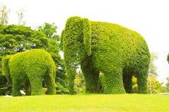 Elephant. The Green elephant tree and green grass stock photo