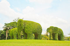 Elephant. The Green elephant tree and green grass stock photography