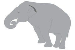 An elephant stock photography