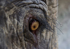 Elephant. Eye of an elephant in the Bago Yoma forest in Myanmar Stock Photo