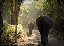 Free Elephant Royalty Free Stock Images - 28302379