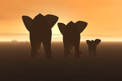 Elephant. 3D render of a Group of elephants in africa Royalty Free Stock Image