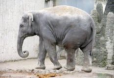 Elephant 3 Stock Photo