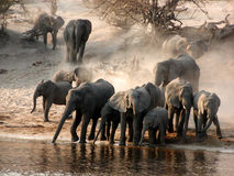 Free Elephant Stock Photos - 32995903