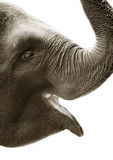 Elephant Stock Photography