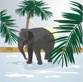 Elephant. On a walk among palms Royalty Free Stock Photos