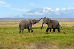 Free Elephant Royalty Free Stock Photography - 39291317