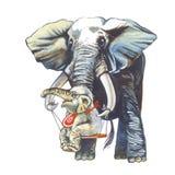 Elephant_4 Royalty Free Stock Photos