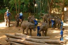 Elephant2 Imagem de Stock