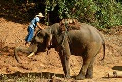Elephant3 Photos libres de droits
