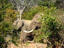 Elephant_3 Royaltyfri Bild