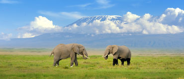 Free Elephant Stock Images - 46060674