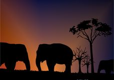 Elephant. Silhouette front of sky Royalty Free Stock Image