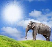 Elephant. Sunny African Pasture with Elephant Stock Image
