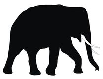 Elephant. Abstract vector illustration of elephant Royalty Free Stock Images