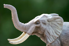 Elephant Stock Photos