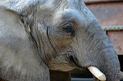 Elephant. Deatil of an elephant Stock Photo