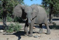 Free Elephant Stock Photography - 9763082