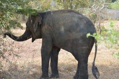 Free Elephant A Park Stock Image - 125484481